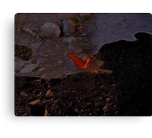 Butterfly Shadows Canvas Print