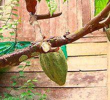Put the lime in de Coconut... by Michelle Hamilton