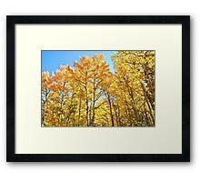 Colorado Aspen Groves and Fall Colors Framed Print