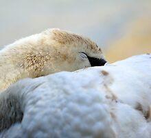 I Sleep by MWhitham