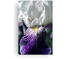 Smiling Iris Canvas Print