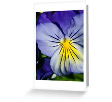 Pansy Afternoon Greeting Card