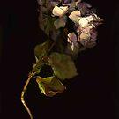 Botanica Mori by Barbara Wyeth