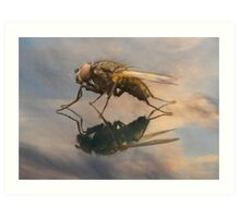 Fly in the mirror Art Print