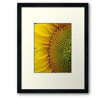Sunflower Glory~ Framed Print