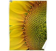 Sunflower Glory~ Poster
