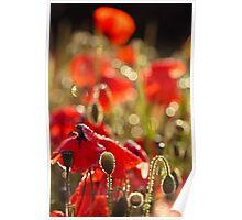 Sunday Morning Poppykeh Poster