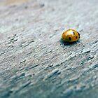 Ladybird on plank by PhotosbyDrJ