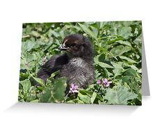 Chick Chick Greeting Card