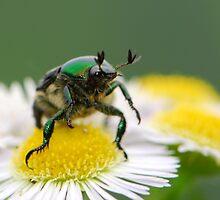 metal-like beetle by davvi