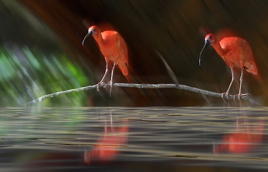 1770 by peter holme III