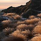 North Rough Ridge by Liz Davidson