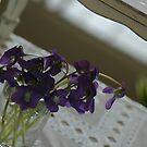 violets in spring by dabadac