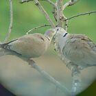 Love Birds by cmehta82