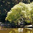 Lake Daylesford by prbimages