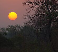 Sunrise, Assam, India by John Mitchell