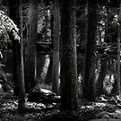 Midnight Grotto by Aimee Stewart