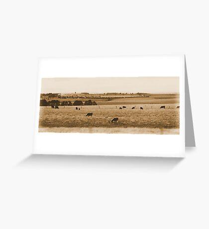 Grazing Cows - Victoria, Australia Greeting Card