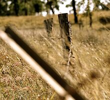 Old barb wire fence by Anthea Bennett