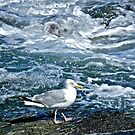A Seagull Steps Along The Surf - Newport Rhode Island by Jack McCabe
