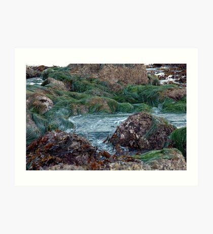 ocean seaweed on rocks Art Print
