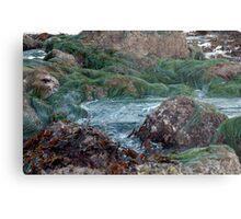 ocean seaweed on rocks Metal Print