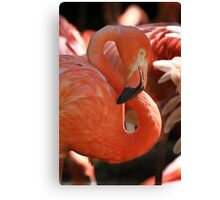 Figure Eight in Pink Canvas Print