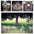 Lincoln Park by Barbara Wyeth