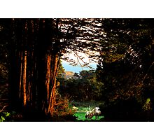 Magic Glade Photographic Print