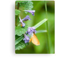 Garden Moth Canvas Print