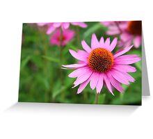 Echinacea  Greeting Card