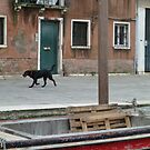 Dog in Venice by joycee