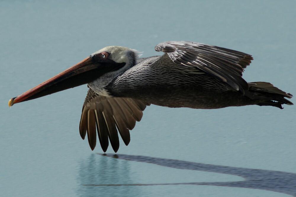 Pelican Aloft, Blue Sea by Jane McDougall