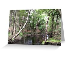 Naturescape 12 Greeting Card