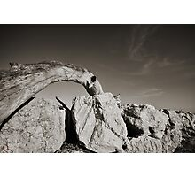 Adriatic Drift Wood Photographic Print