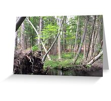 Naturescape 14 Greeting Card