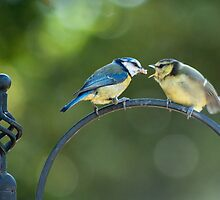 Blue Tit Fledgeling being fed by TerryPatrick