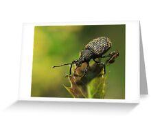 Vine Weevil Greeting Card