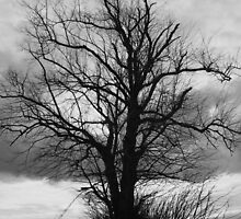 Dark Tree by Mrpunkfox
