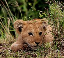Out of Africa - Peek A Boo, I See You by Sally Haldane