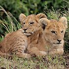 Out of Africa - You Keep Comfy by Sally Haldane