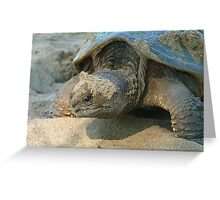 Snapper Greeting Card