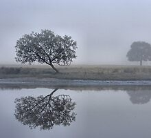 Foggy Reflections - Bedlam Creek NSW by Bev Woodman