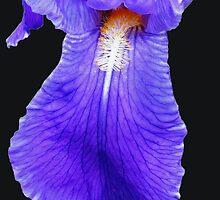 Purple Ball Gown - Iris Supermacro by BlueMoonRose