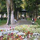 City park by machka