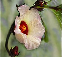 flowering rosella by Helenvandy