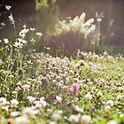 Summer Meadow by Wolf Kettler