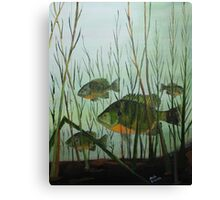 Stacked Blue Gills Canvas Print