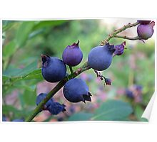 The Wild Blueberry Poster