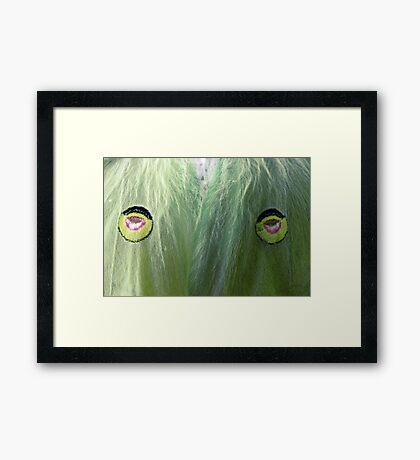 Protection for the Luna Moth Framed Print